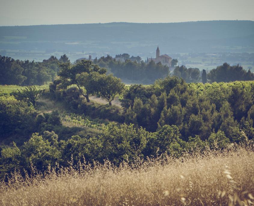 Cairanne vin _ Charte Paysagère